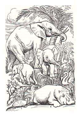 elephants et hippopotame nains insulaires